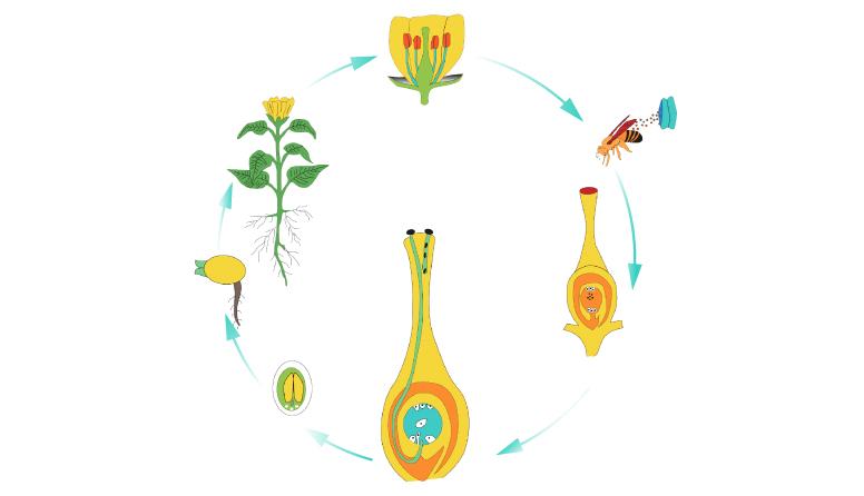 Cvjetnjače biljke 2.4.2020.