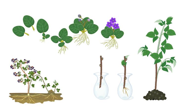Cvjetnjače biljke Dijelovi cvjetnice